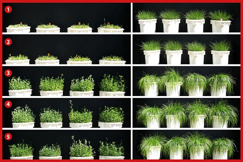 Glatt_PHOS4green_Planting trials